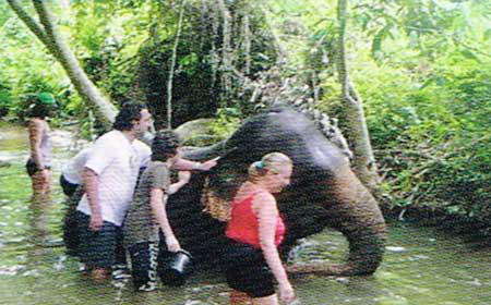 Huay Tho Safari Elephant Trekking Waterfall Jungle Tours Krabi Thailand